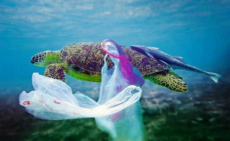 Tartaruga e plastico