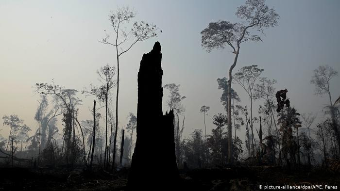 Degradação da Amazônia já é irrecuperável, diz estudo