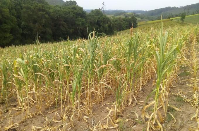 Crise hídrica pode 'segurar' o PIB agrícola