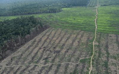 Desmatamento: até as bases degradadoras de Bolsonaro e Salles precisam se preocupar