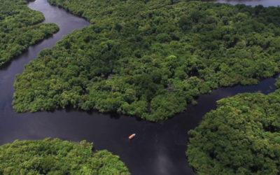 Dia Mundial do Meio Ambiente: Uma década para salvar o planeta