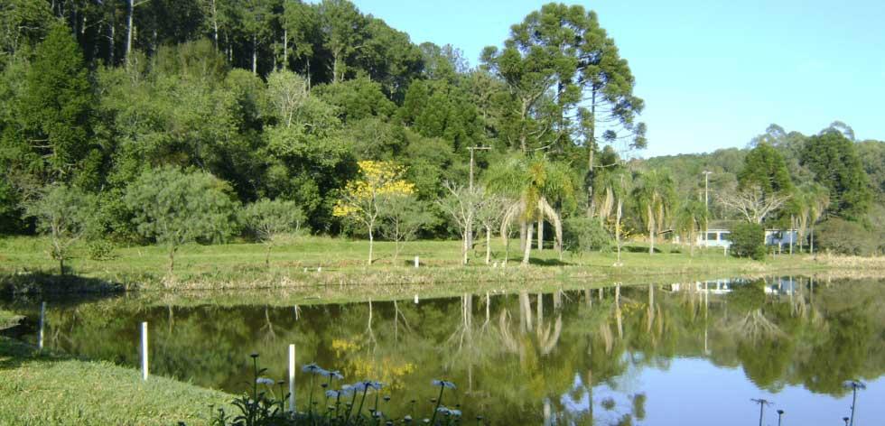 A receita neoliberal para privatizar florestas