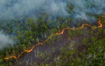 Apelo aos líderes mundiais: salvem a biodiversidade brasileira. A natureza pede socorro!
